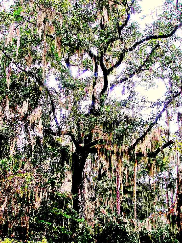 43 Best Images About Alfred B Maclay Gardens State Park On