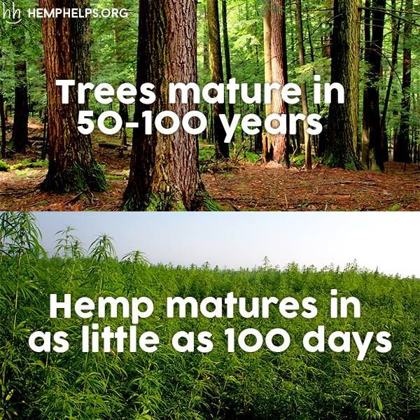 Hemp can pretty much make any product that timber can. More importantly these products will be more durable and sustainable.  #Hemp not #Trees