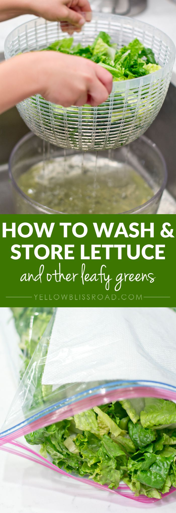 Extend the life of fresh lettuce, kale and other leafy greens by using these simple tricks. Plus, 12 Year Round Salad Recipes!