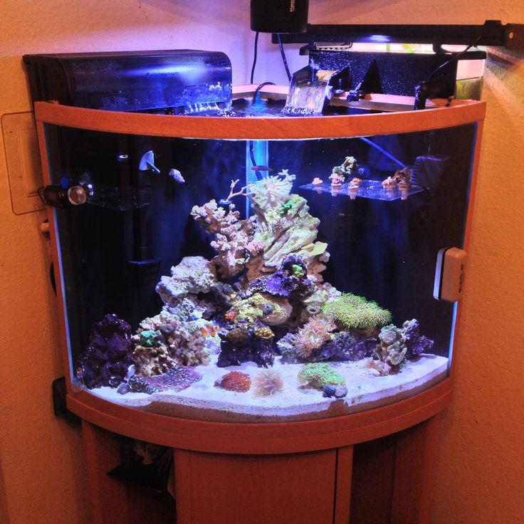 9 Best Corner Reef Tank Images On Pinterest