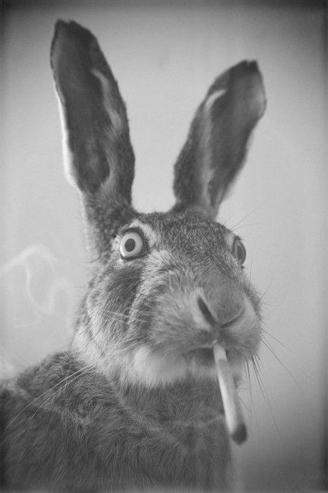 .stop smoking, bunny!