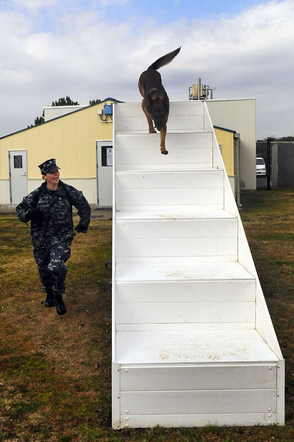 Master-at-Arms 3rd Class Kendahl Peterson, a K-9 handler with the Military Working Dog Kennel at Commander, Fleet Activities Yokosuka, runs her K-9 partner, Donci, through an obstacle course at the base kennel.