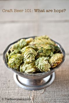 Craft Beer 101: What Are Hops?
