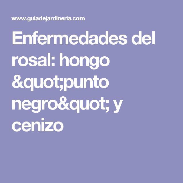 """Enfermedades del rosal: hongo """"punto negro"""" y cenizo"""