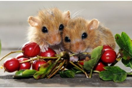 Baby Dormice found orphaned and rescued in Cornwall