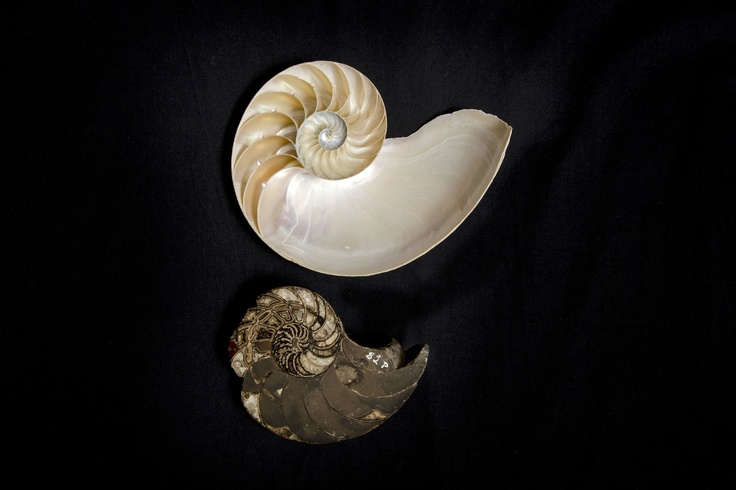 The World is Their Oyster: Marvellous Molluscs