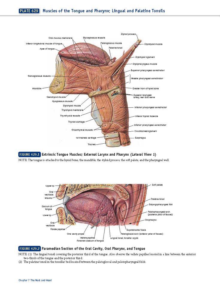 Tolle Grundlagen Der Menschlichen Anatomie Und Physiologie Kapitel 2 ...