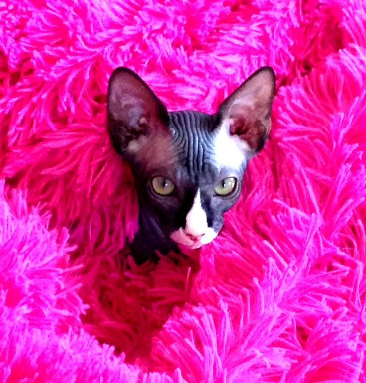 Jaxx in Pink