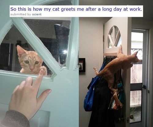 Aww: Cool Cats, Kitty Cats, Cute Cats, Funnies Cats, Random Funnies Pictures, Cute Funnies, Work Funnies, Front Doors, Funniest Pictures