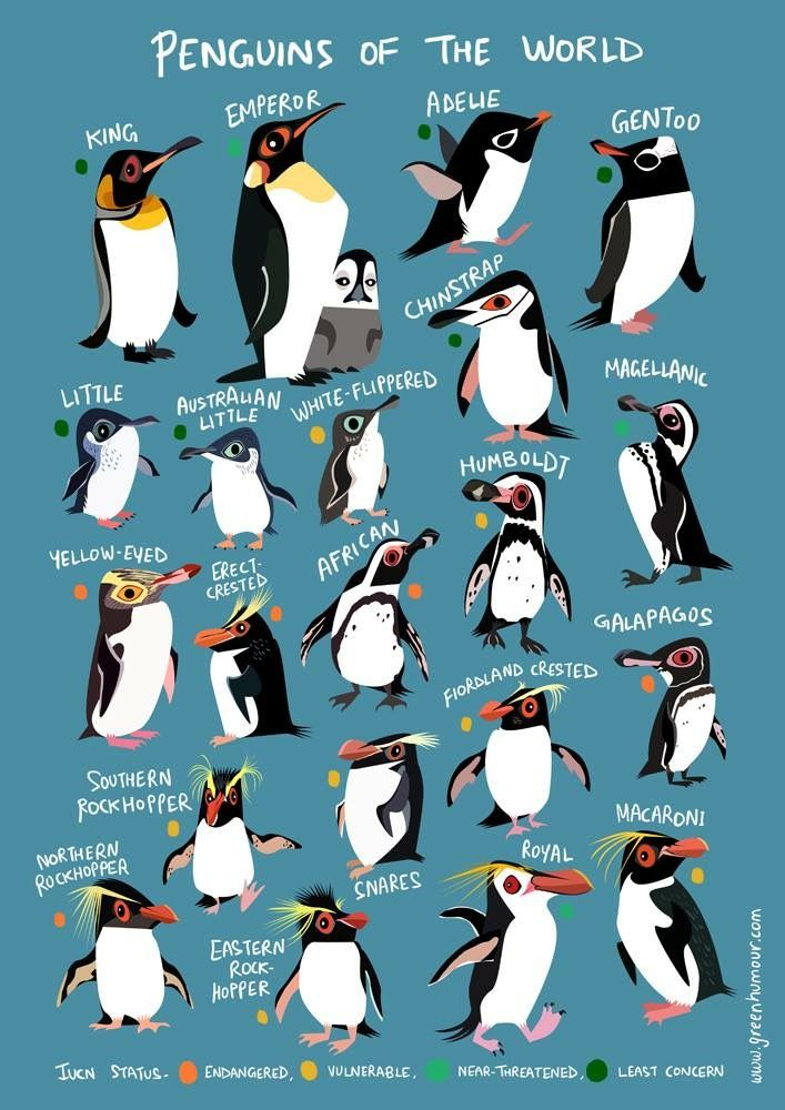 Pin By Tracy Walker On Iphone Wallpapers Penguins Animal