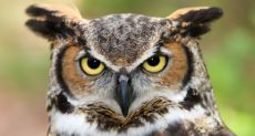 Why Night Owls Are More Intelligent Than Morning Larks -  More intelligent people wake up late and stay up late | Psychology Today https://www.psychologytoday.com/blog/the-scientific-fundamentalist/201005/why-night-owls-are-more-intelligent-morning-larks so, like me lol...