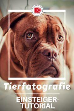 Tiere fotografieren – So kommen Vierbeiner ganz gross raus