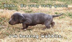 Get the wabbit....