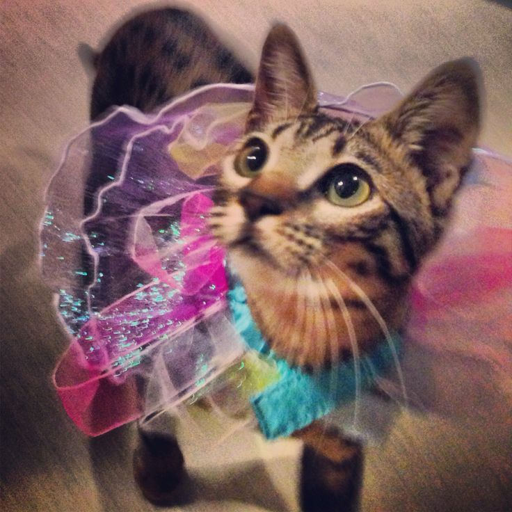 Princess sweetpea