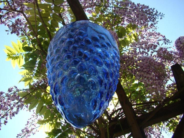 Blauwe druif onder blauwe druif