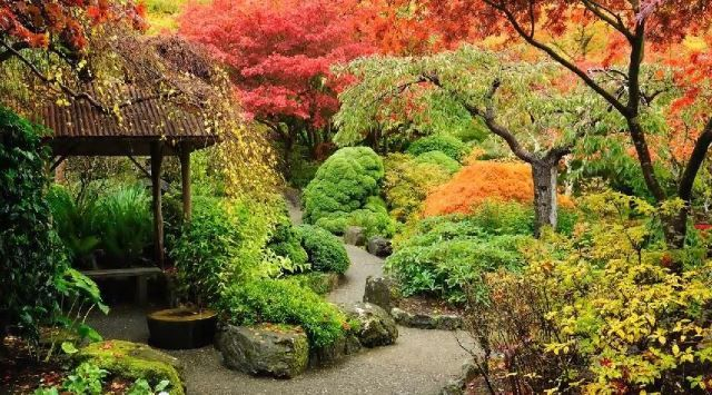 This is a perfect example of how great natural foliage can look in your landscape. These Japanese maple trees are changing colors with the season and look absolutely stunning doing it! Most trees will naturally change colors with the seasons, but in case you have a landscape with trees or plants that don't do this, you can always head over to a garden center to ask which trees will change color.