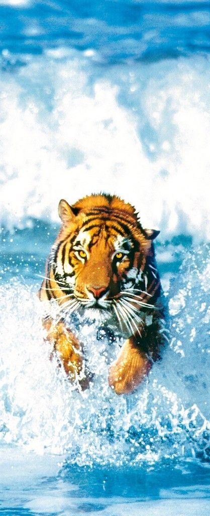Poster: 'Bengalischer Tiger' Tiger Tier Brandung Wellen Meer Sprung Raubkatze Gefahr Blau