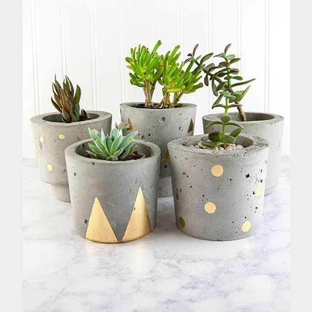 Green and Grey make everyone's day. Potted succs for Friday luck. ♡♡  Tag us #planthousecommunity and @plant.house.community to be featured.  ♡♡  #indoorplants #succulent #cactus #succulove #interiors #indoorgarden #homedecor #indoorgardening #plantlove #plants #interiordesign #urbanjunglebloggers #monstera #plantas #macramewallhanging    #Regram via @plant.house.community