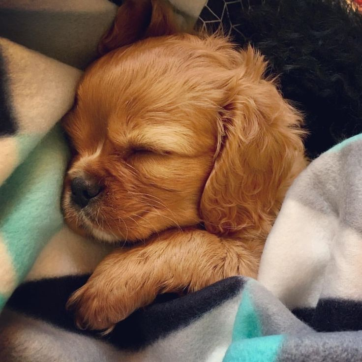 Yeah buddy!...I like you puppy