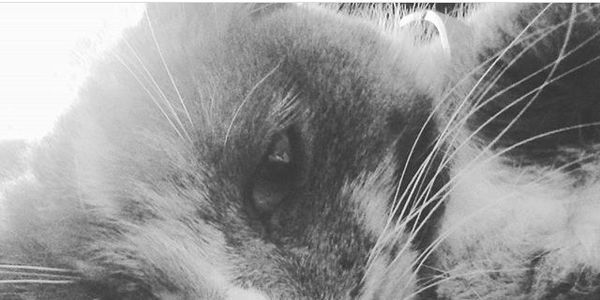 petition: Say No To Mount Carmel's Kitty Killing Proposition, Mount Carmel, PA