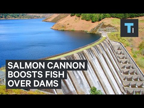 Tech Insider: Salmon Cannon gives fish a boost over dams