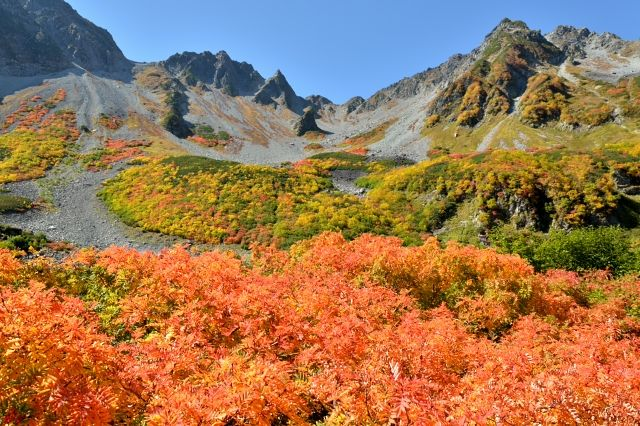 Highland foliage at Karasawa, North Japan Alps.