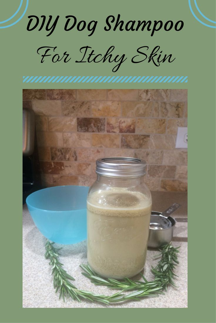 Homemade dog shampoo for itchy, dry, sensitive dog skin