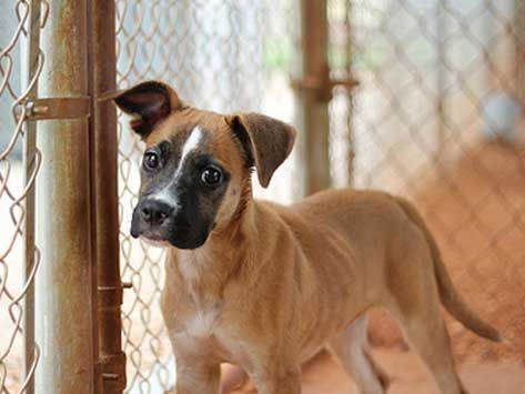Free Puppies | Local Dog Shelters | Puppies For | Pups for Sales ...