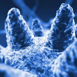 Ancient viruses regenerated from 700-year-old frozen reindeer poop - Medical News Today #poop #virus #reindeer