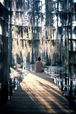 swamp garden: west 8