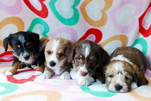 Benefits of choosing a mutt, mongrel or mixed breed of dog ...