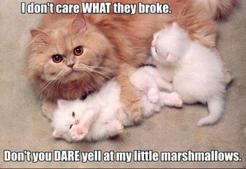Protect your marshmallows. They're cute and stuff.: Cats, Funny Animals, Kitten, Stuff, Funny Cat, Kitty, Marshmallows