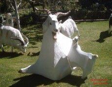 Angora goat-feeding Statue