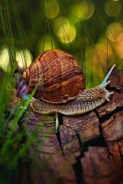 # Snail in the woods bokeh photography