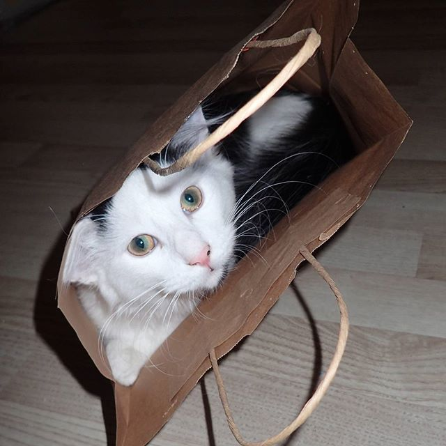 The cat is in the bag! #catpasity #caturdayeveryday #cats #catsofinstagram #catstagram #kitty #cute #cat