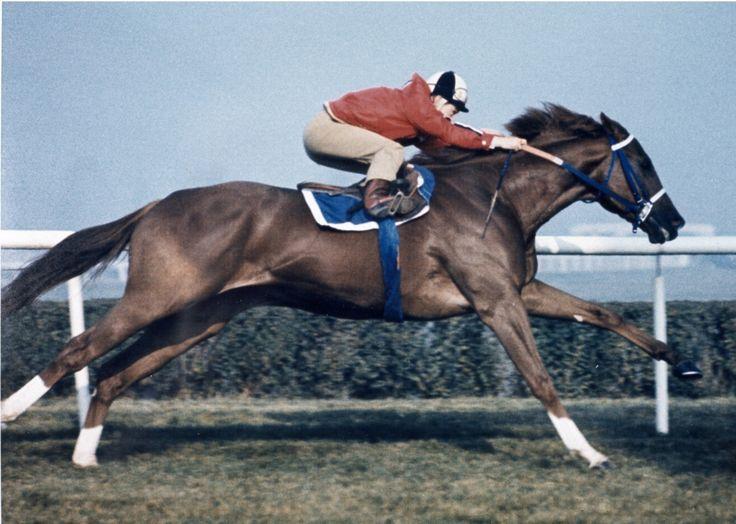 Secretariat Horse | Secretariat | Canadian Horse Racing Hall of Fame