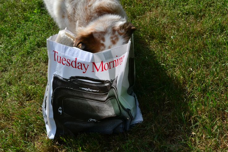 What did you bring me from #TuesdayMorning? Much more than we would have been able to from other stores, thanks to deeply discounted prices on everything from dog toys to cat treats!