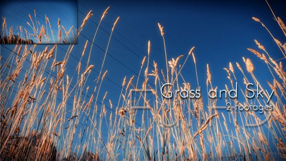 Grass and Sky. Gold cones of a summer field grass against the blue sky. Included: 2 different mov. files FullHD 1920×1080 MJPEG, 18 second each. #video #footages #naturevideo #bluesky #videohive #cinema4design