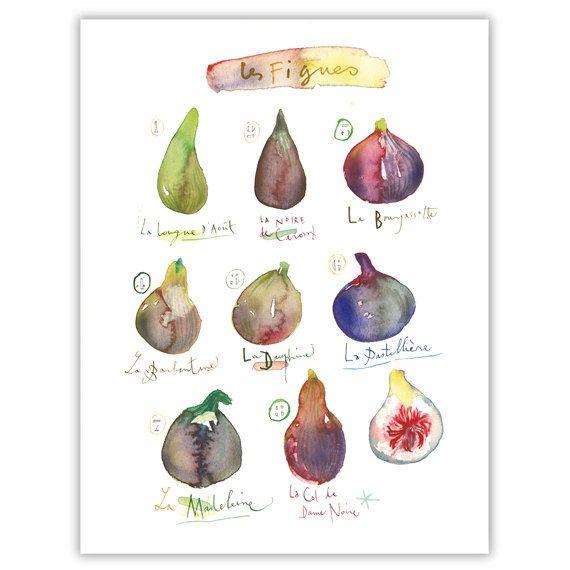 Abb. print, Aquarell Bild malen, Obst-Plakat, Küche Décor, lila Wandkunst, Abb. Abbildung, botanische Kunst, Küche Print, Essen Kunst