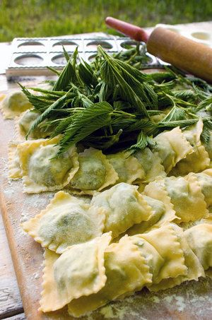 Wildharvesting recipes: Stinging Nettle Ravioli, Lambsquarters And Goat Cheese Omelet, Dandelion Greens With Bacon And Sherry Vinegar.
