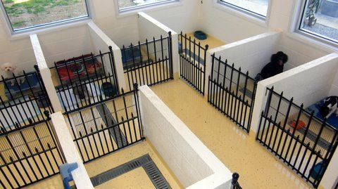 Photos of small dog apartments for boarding your small pets – Pet Resorts of America