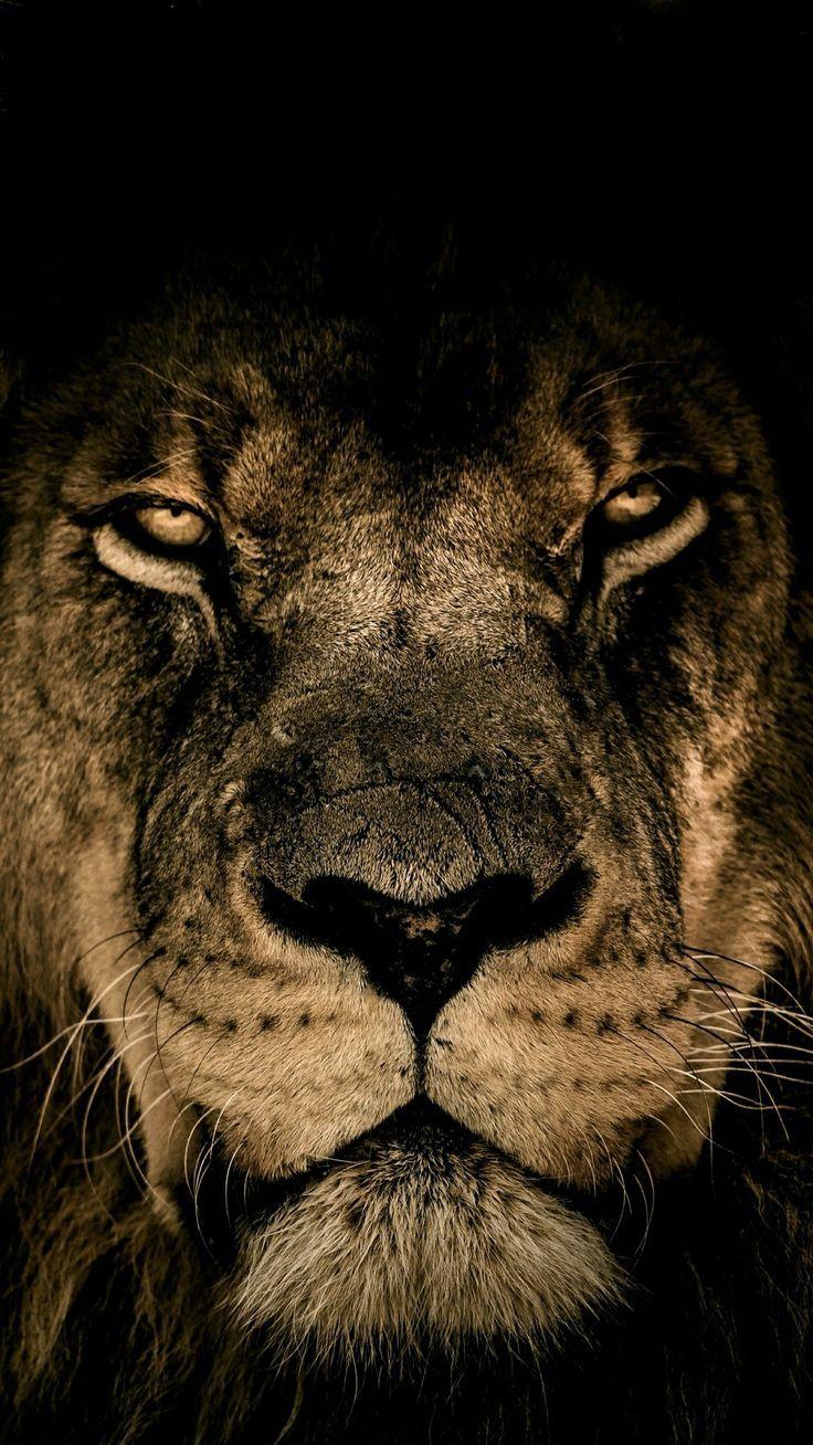 Lions/Tigers – #lei #LionsTigers