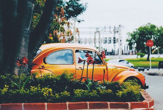 El pichirilo naranja de paseo en Bogotá. Andrew Perdomo.