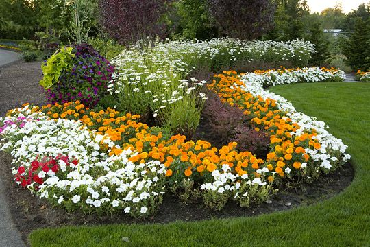 Garden Design with Landscape Materials used  marigolds and pansies The  contrasting with Front Landscape Ideas. Garden Design  Garden Design with Flower Bed With Petunia And