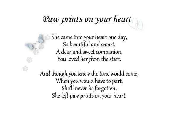 Dog Loss Quotes Entrancing Best 25 Dog Loss Quotes Ideas On Pinterest  Dog Loss Pet Quotes