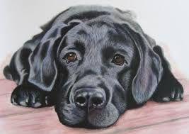 Bildergebnis für das Zeichnen eines Labradors
