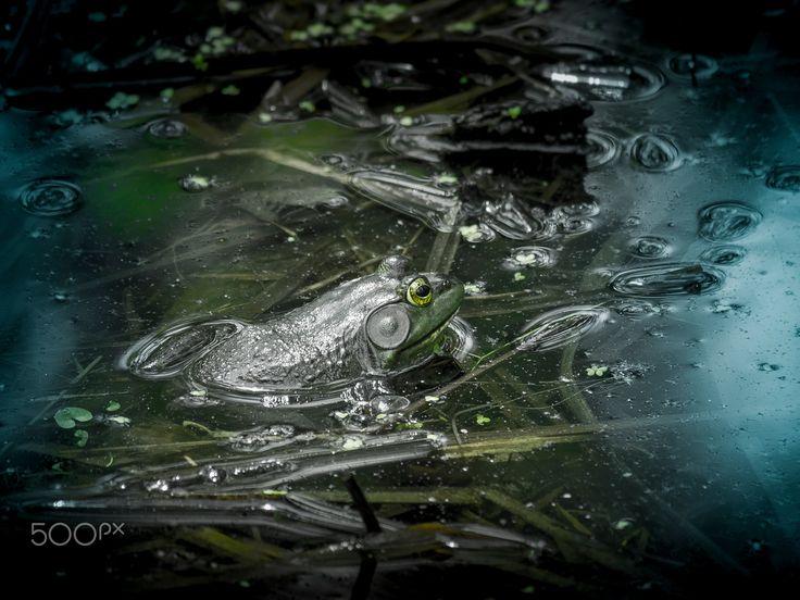 Amphibian in a marsh - Amphibian