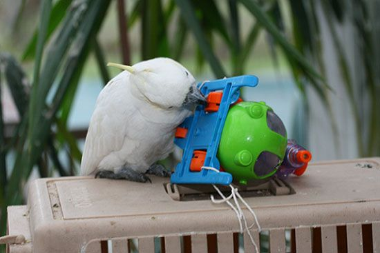 Bird Enrichment Toys : Enrichment or how to keep your parrot happy dots toys