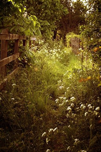 green grass, secret garden... oh to run through this sun dappled path...