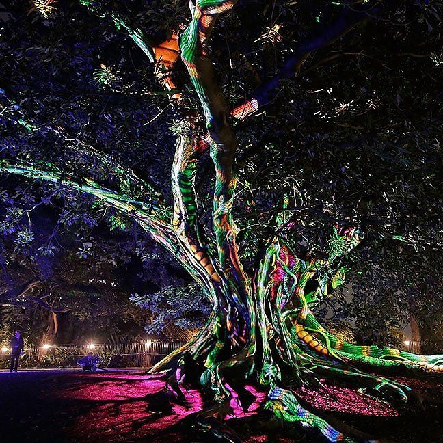 A tree is illuminated during the 'Garden of Light' display at The Royal Botanic Gardens in Sydney Australia May 25 2016. Held annually Vivid Sydney is the world's largest festival of light music and ideas.  Photograph by Brendon Thorne@gettyimages.  #sydney #gardenoflight #nature by time
